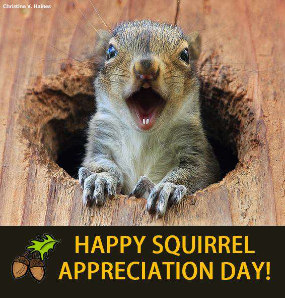 National Squirrel Appreciation Day Wishes
