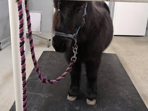 Huono juontinen poni - ja se looginen seuraus