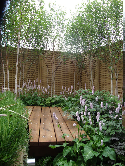 rdest pod brzozami, drewniany podest i ogrodzenie