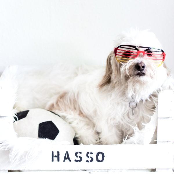 Fussball-Experte Hasso zur Europameisterschaft 2016