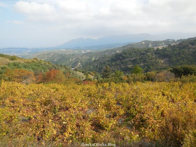 Jesienny grecki krajobraz. Góry, złota plantacja winogron.