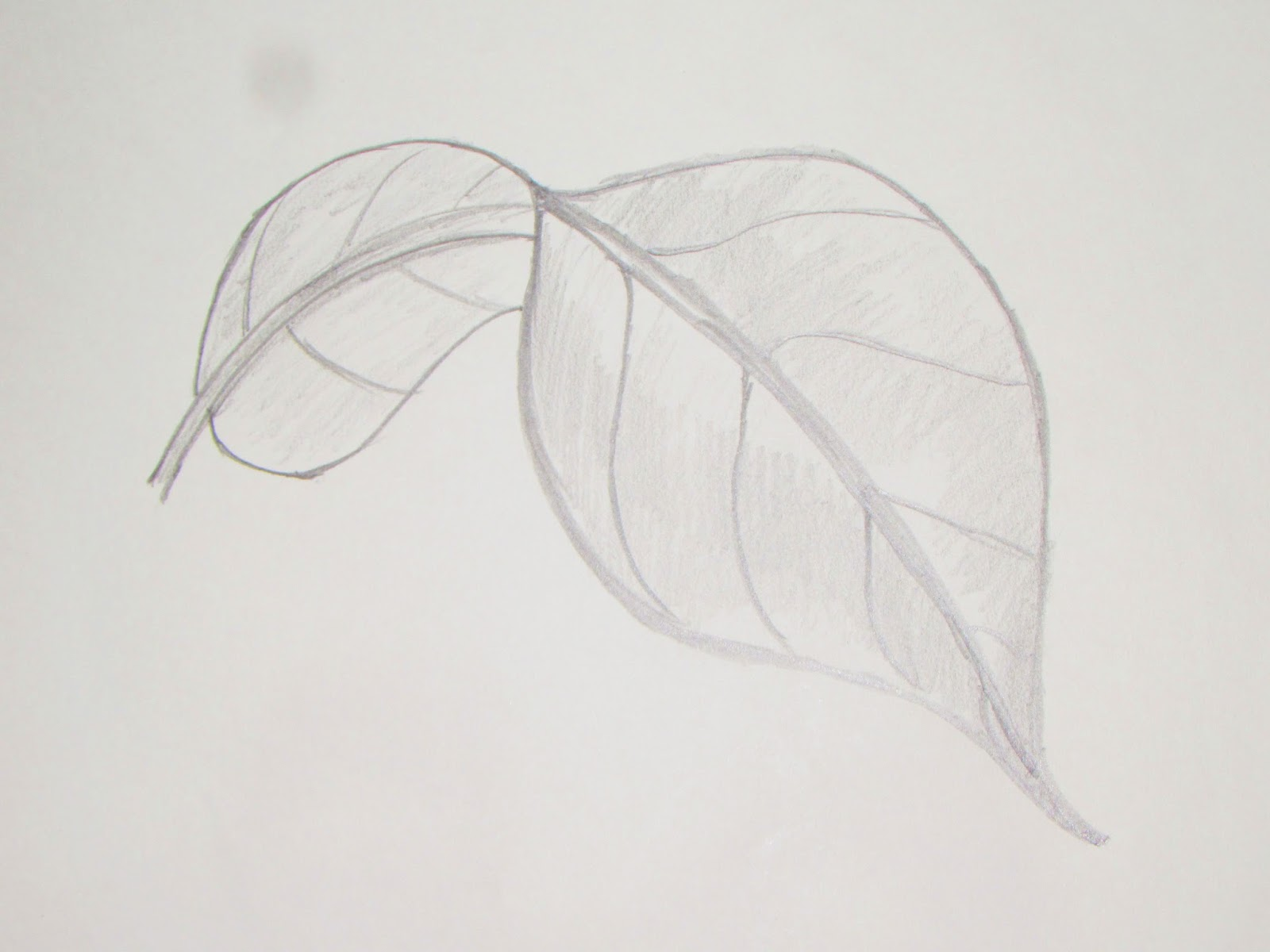 How to draw or sketch long turned mango leaf 5