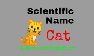 Scientific Name Of Cat