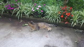 何かに気づいたキジトラ猫
