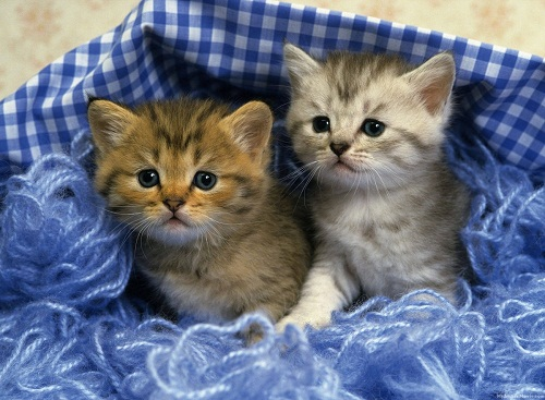 Beautiful Cat Picture