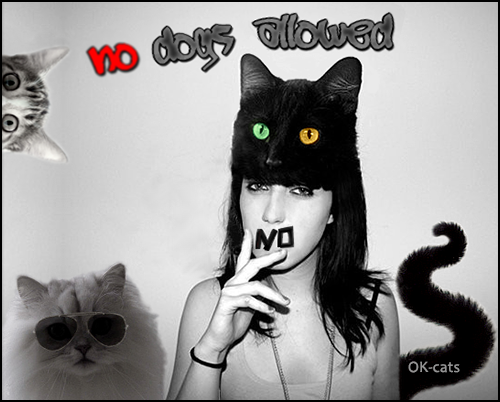 CAT-nipulation • No døgs allowed NO. Our Website is only for cat lovers