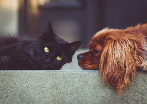 Test hond kat huisdieren