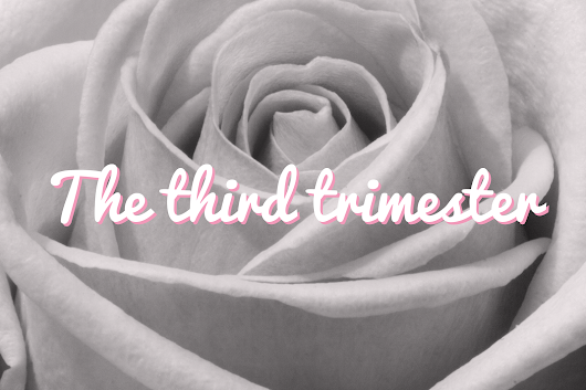 Pregnancy Update | The Third Trimester
