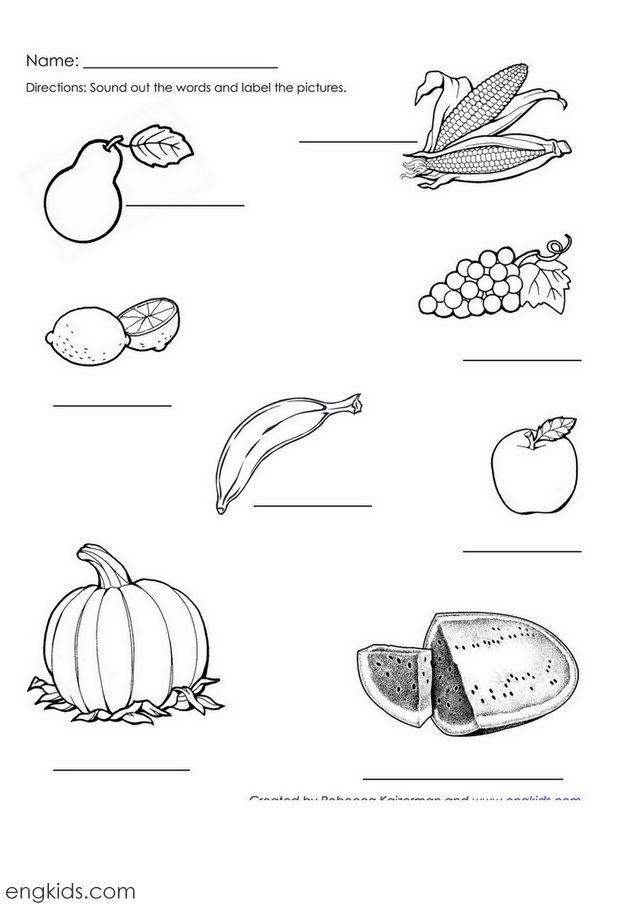 Pumpkin Label The Plant Parts Diagram