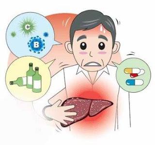 Лецитин - сердце, печень и профилактика старения