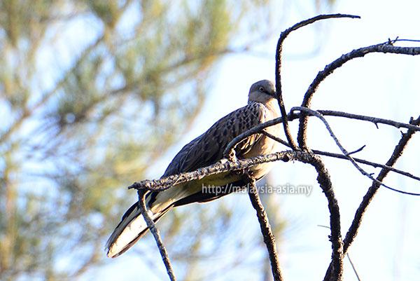 Bird Watching at Piasau Nature Reserve