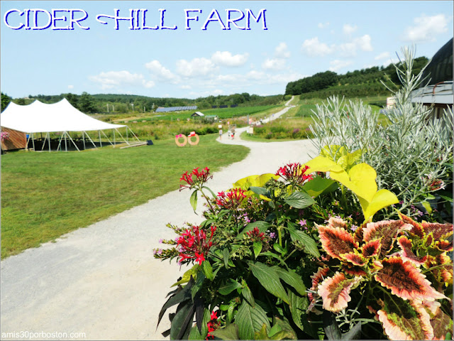 Granjas de Massachusetts: Cider Hill Farm