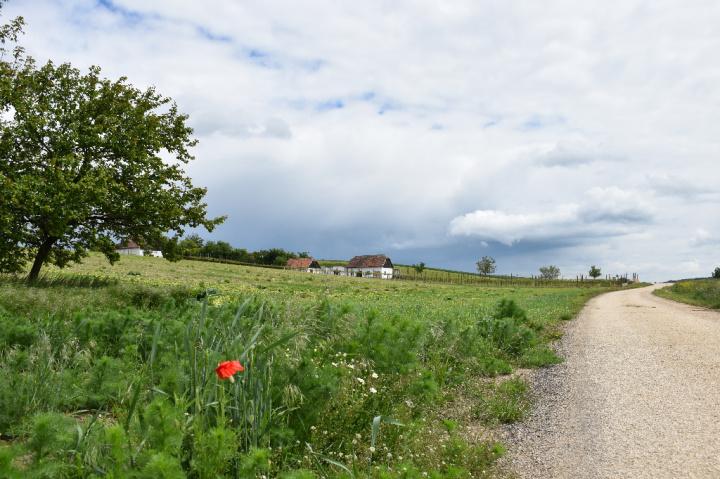 Felder und Kellergasse im Mai vor einem Regenschauer