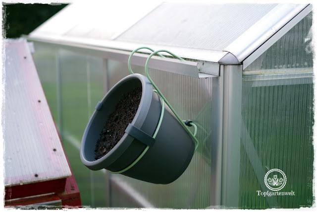 Gartenblog Topfgartenwelt Produkttest EMSA My City Garden: der Hängetopf ziert mein Gewächshaus - Sommer sollte darin Kapuzinerkresse wachsen