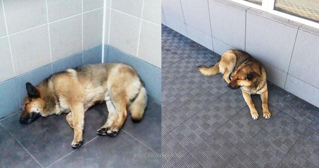 В камчатском аэропорту пес уже неделю ждет своего хозяина