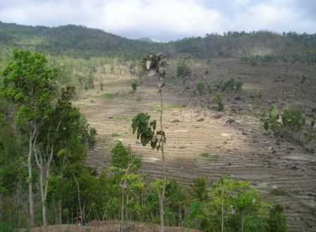 Hutan gundul akibat penebangan liar