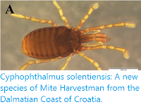 http://sciencythoughts.blogspot.co.uk/2015/12/cyphophthalmus-solentiensis-new-species.html