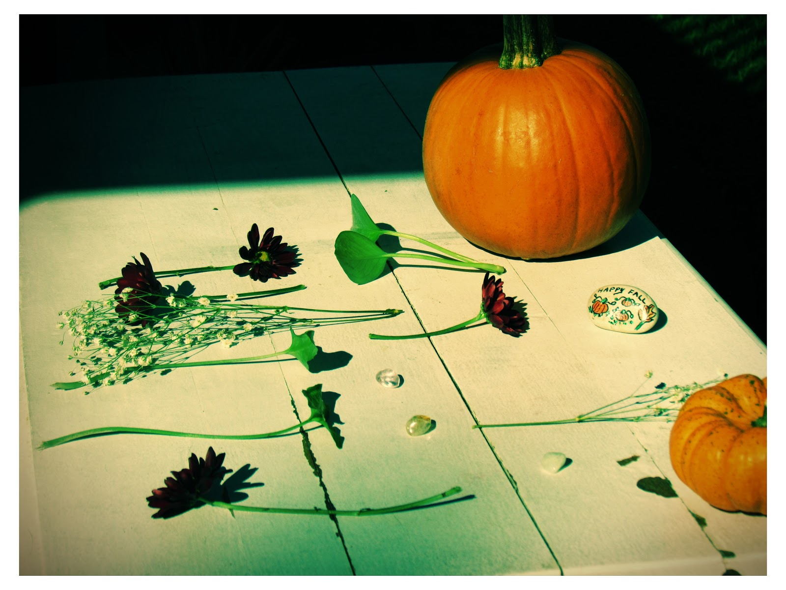 Lomo Art Photography Polaroids With Nature Art and Pumpkins + Flower Designs
