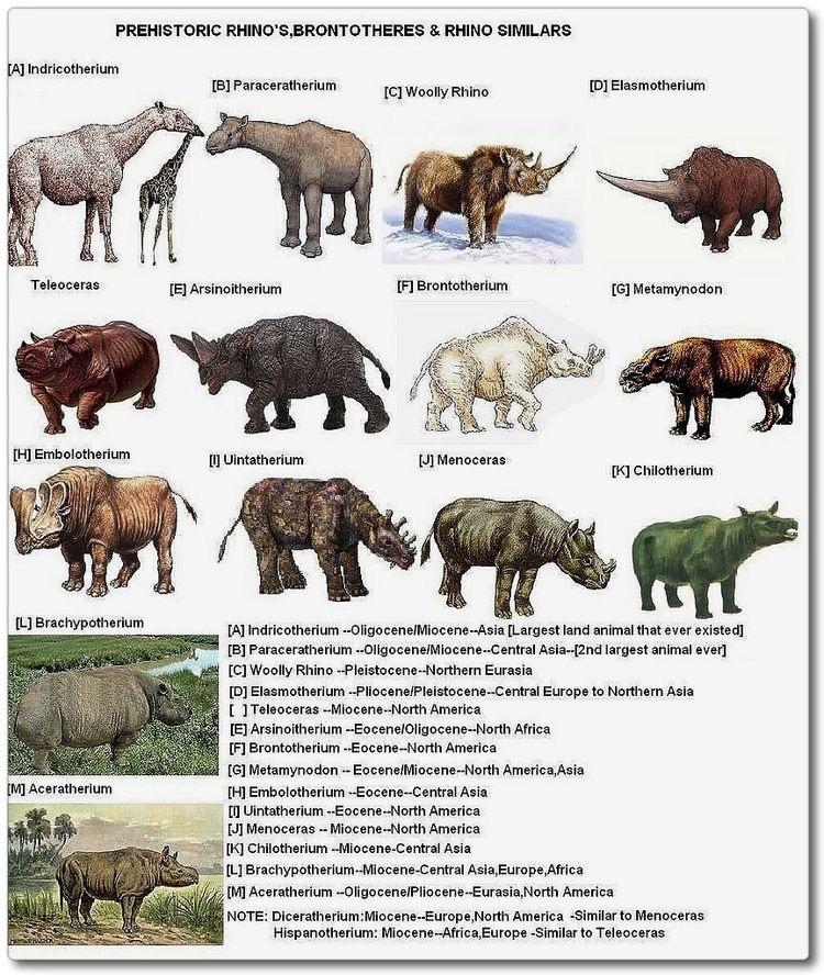 Rinocerontes Pré-Históricos
