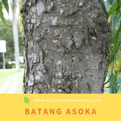 Batang Asoka