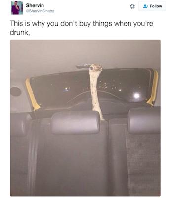 emu ostrich in the back of a car fail