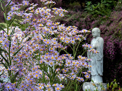 Shion (Aster tataricus) flowers and a statue of Jizo Bosatsu: Engaku-ji