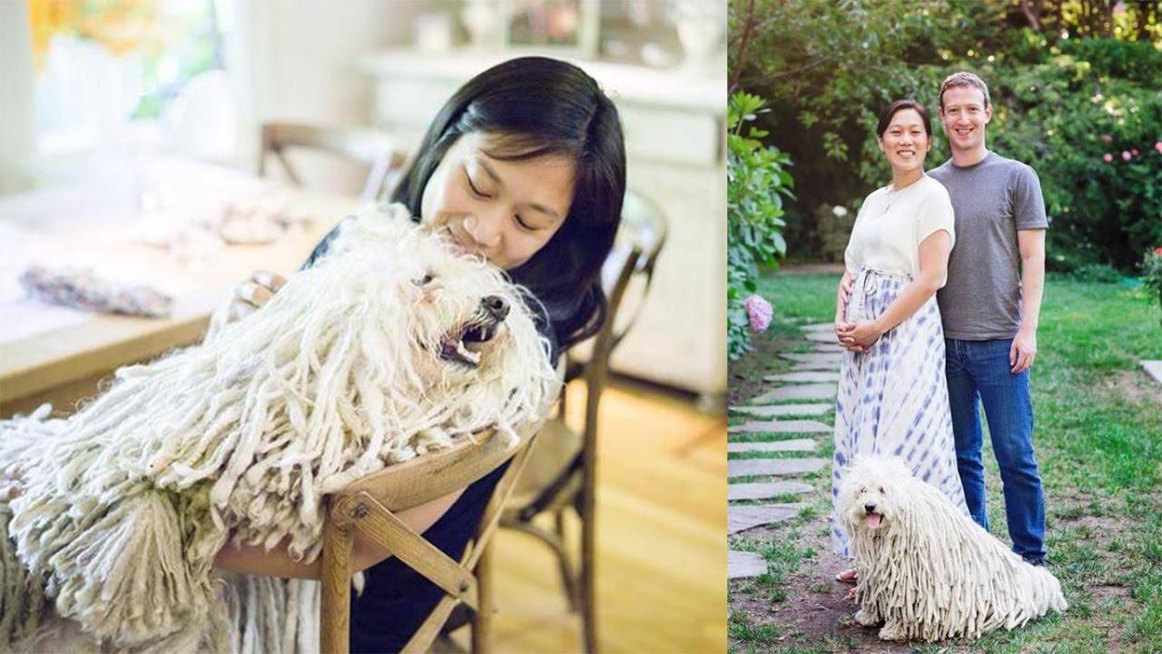 Mark Zuckerberg S Dog Breed