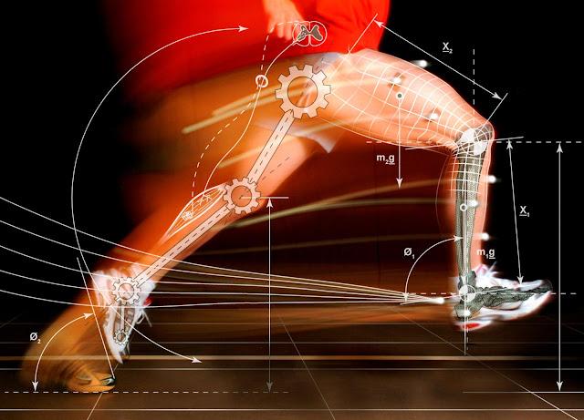 Combustíveis para a contração muscular, Nutrição, Musculação, Dieta, Treino, IFBB, Atletas, Gasto de energia, Queima de Gordura, Contração, Músculos, Muscles, Garotos e Gatas Fit