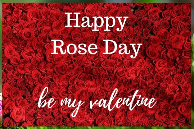 Happy Rose Day | Wallpaper For Rose Day | Significance Of Rose Day