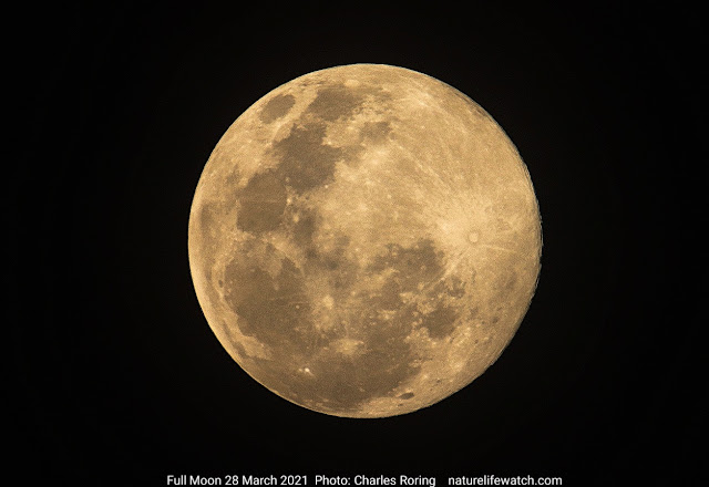 image of full moon taken by Leo Charles Roring in Manokwari on 28 March 2021
