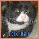 http://animaux76.blogspot.fr/2014/03/decibel-8mois-male.html