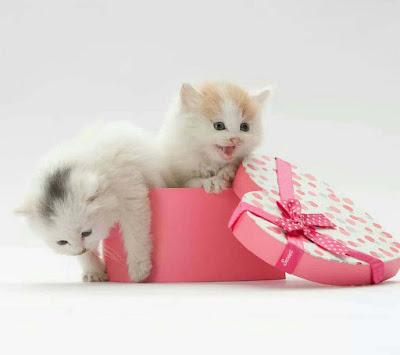 pink-white-caty-kittens-walls-imgs