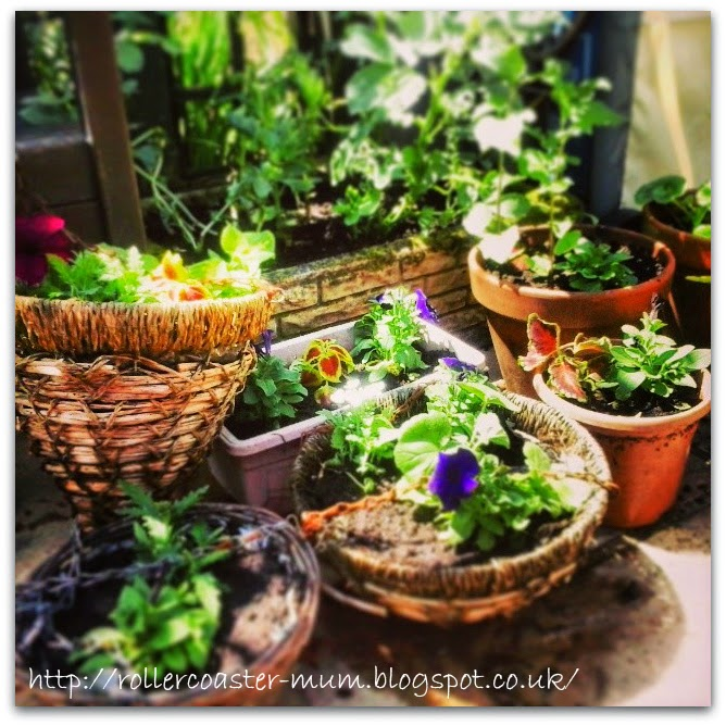 Gardening for the summer, hanging baskets and containers