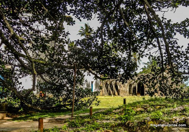 Gameleira Sagrada da Praia do Forte, Bahia