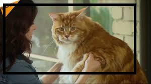 المزيد من الأشياء لمعرفته عن القطط