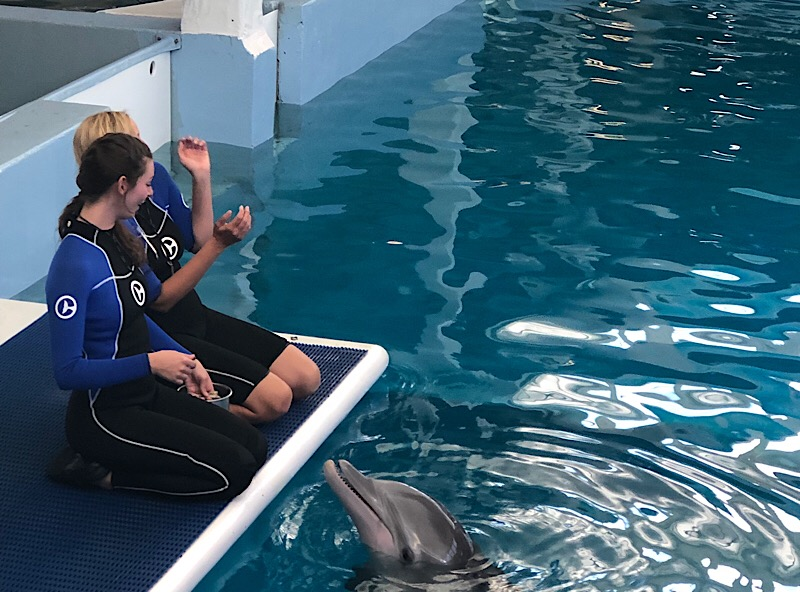 Clearwater Aquarium Florida Winter Dolphin