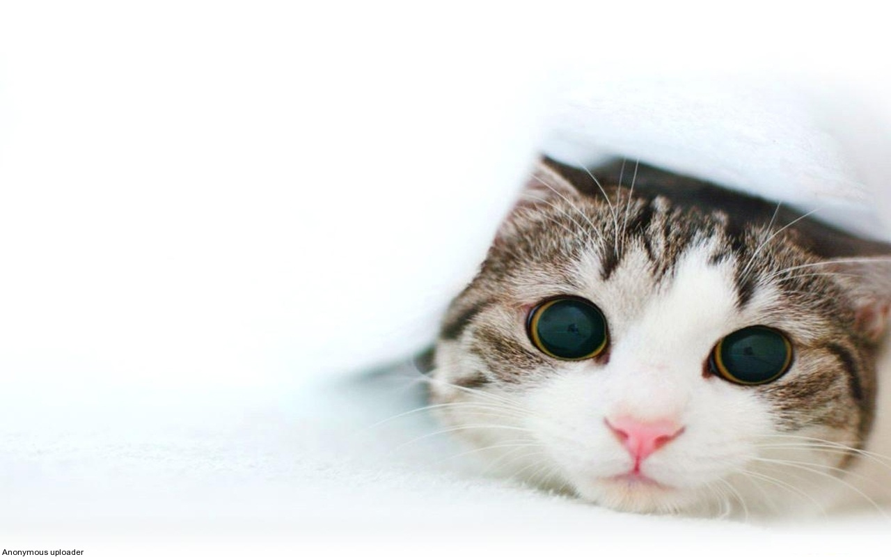 Cute kittens hd wallpapers high definition free - Kitten backgrounds ...