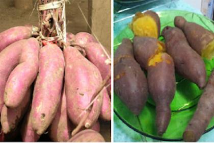 Inilah 9 Makanan yang Bisa Bikin Area Kew4nitaan Harum dan Sehat.
