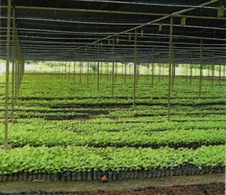 komoditas tanaman hias dan pertamanan