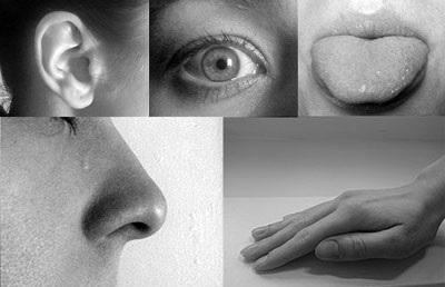 shqisat, vesh, hundë, sy, shijim, prekje