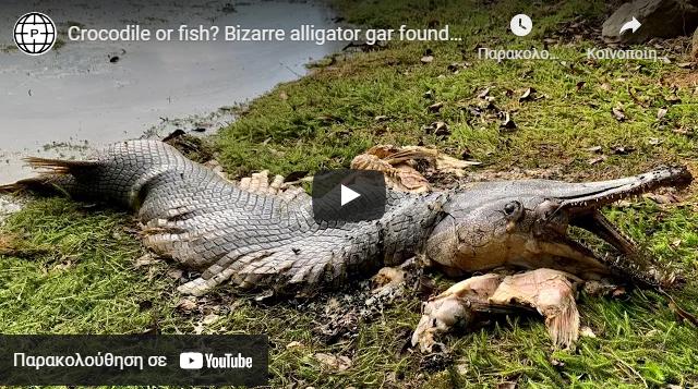 Τεράστιο προϊστορικό ψάρι ξεβράστηκε προκαλώντας σοκ στους περαστικούς (video)