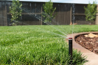 How Much Water Does My Lawn Need