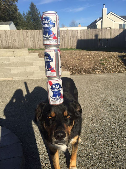 Perro equilibrista