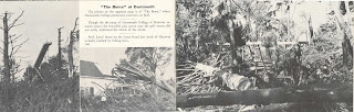 An open booklet, filled with pictures of downed trees.