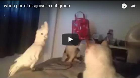 La cacatúa que maúlla y se hace amiga de los gatos