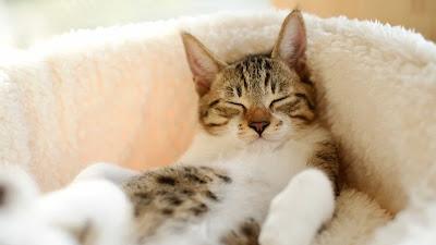 صور قطط صغار,قطط جميلة جدا,احلى صور قطط ,قطط صور,صور قطط حلوه,صور قطط جميله جدا,صور قطط حلوة,بزازين جميله ,قطط جميلة جدا جدا جدا,