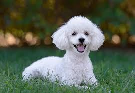 Perros amistosos e inteligentes