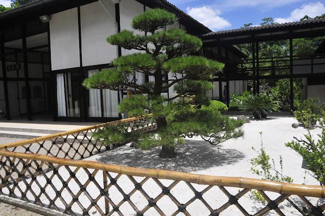 pavilhao japones parque ibirapuera, jardim japones, kuromatsu, pinheiro negro