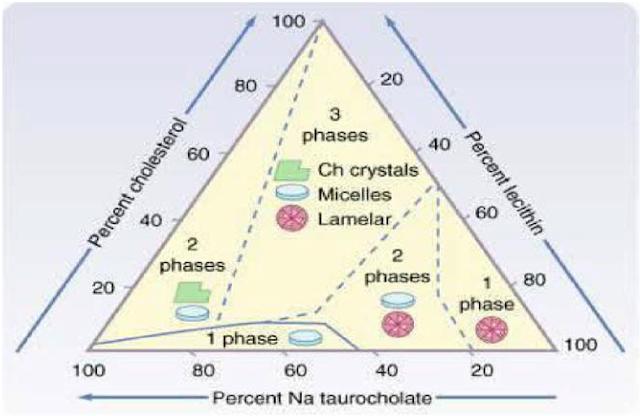 Diagram fase triangular terbentuknya batu kolesterol, persentase kolesterol, lecithin, lesitin, Natrium taurocholate, Micelles Lamelar crystals, kristal, 3 fase persen, percent