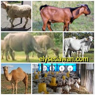 gambar binatang atau hewan yang halal dimakan